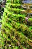 生苔石墙 库存照片