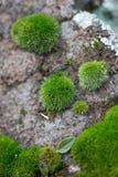 生苔石头 库存图片