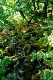 生苔石头在森林里 免版税库存照片