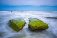 生苔石头 库存照片