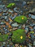 生苔砂岩冰砾在山河中水。清除与反射的被弄脏的水。 免版税库存图片
