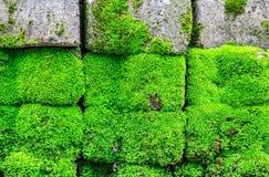 生苔砖地板 免版税库存照片