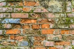 生苔红砖墙壁背景 免版税库存照片