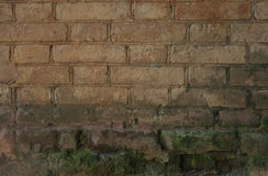 生苔老的砖墙 免版税库存照片