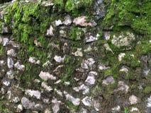 生苔老石墙 免版税库存照片