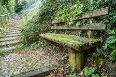 生苔长凳和小径 库存图片