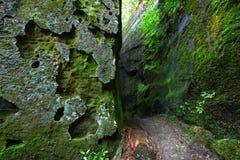 生苔阿拉巴马的峡谷 库存照片