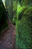 生苔阿拉巴马的峡谷 库存图片