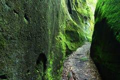 生苔阿拉巴马的峡谷 免版税库存图片