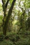 生苔雨林 免版税库存照片