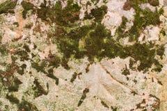 生苔,粒状砂岩背景纹理 库存照片