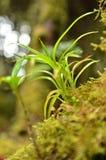 生苔围拢的绿色射击有迷离背景 库存照片