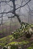 生苔结构树 免版税图库摄影