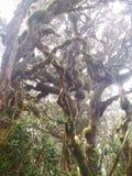 生苔结构树 库存图片