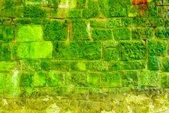 生苔绿色砖墙 免版税库存照片