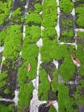 生苔1块的砖 免版税库存图片