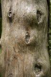 生虫的木树桩 免版税库存照片