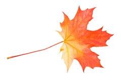 生锈叶子的槭树 免版税库存图片
