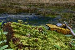 生锈在高绿草的老被放弃的汽车 免版税库存照片