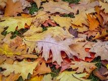生锈的下落的秋天叶子在水中 库存照片
