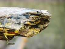 生锈的分解的木头,死对末端 免版税库存照片