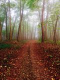 生锈的森林 库存照片