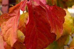 生锈的秋天leafes细节  免版税库存照片