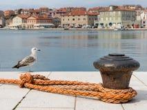 生锈的系船柱、橙色露水和一个youg海鸥在茨雷斯岛港口  图库摄影