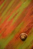 生锈的蜗牛 库存图片