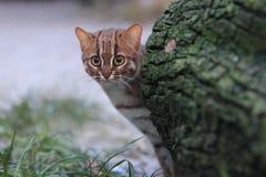 生锈的被察觉的猫 图库摄影