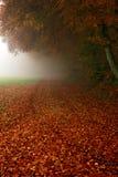 生锈的金黄叶子和早晨雾 免版税库存图片