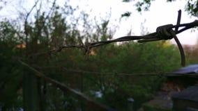 生锈的铁丝网 在铁丝网后的森林 影视素材