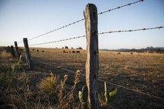 生锈的锋利的木材和金属倒钩铁丝网 免版税库存图片