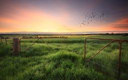 生锈的门对麦子和油菜庄稼打开 库存图片
