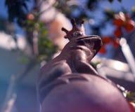 生锈的青蛙国王 免版税库存照片