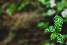 生长与文本的空间的湿绿色森林地板叶子 图库摄影