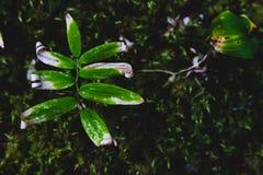 生长与文本的空间的绿色森林地板叶子 免版税库存图片