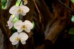 生长与森林的兰花 免版税库存图片