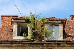 生长从在两个残破的屋顶窗口之间的生锈的金属天沟的小树在被放弃的老大厦 免版税库存图片
