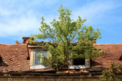 生长从在两个被毁坏的屋顶窗口和残破的瓦之间的生锈的金属天沟的大树在被放弃的老大厦 免版税库存图片
