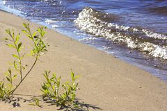 生长从在河岸的沙子的植物 免版税库存照片