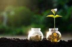 生长从在玻璃瓶子之外的硬币的金牌硬币树玻璃瓶子厂在节约金钱被弄脏的绿色的自然本底和 图库摄影