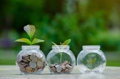 生长从在节约金钱玻璃的瓶子和投资财政概念之外的硬币的硬币树玻璃瓶子厂 库存图片