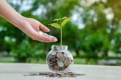 生长从在节约金钱玻璃的瓶子和投资财政概念之外的硬币的硬币树玻璃瓶子厂 免版税库存照片