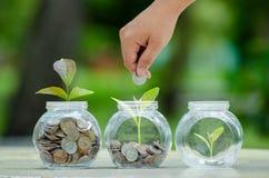 生长从在节约金钱玻璃的瓶子和投资财政概念之外的硬币的硬币树玻璃瓶子厂 免版税库存图片