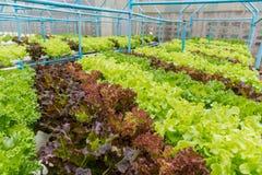 生长使用矿物营养solu的植物水栽法方法  免版税库存图片