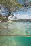 生长入湖的树 免版税库存照片