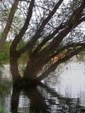 生长和反射在波纹湖的树 免版税库存图片