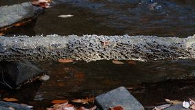 生长在一个下落的树干的真菌在Hacklebarney国家公园是国家公园新泽西 免版税库存图片