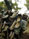 生长在一个下落的树枝的蘑菇和真菌 免版税库存图片